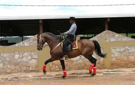 Uruguayan Equines