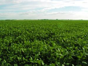 Land Value in Uruguay