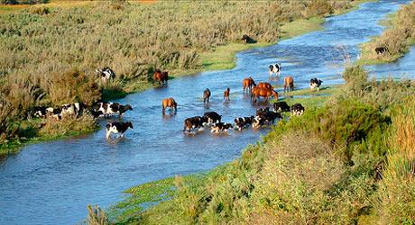 Art-Nuevas-fronteras-para-la-ganadería-en-el-Cono-Sur3