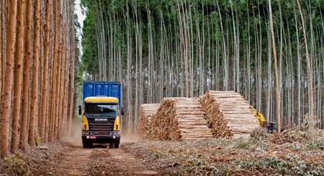 Forestal Uruguay I